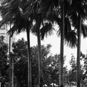 Women sitting at base of palm trees