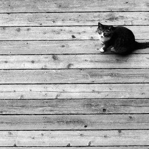 板の間で寛ぐ猫