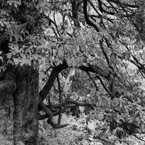 樹の下で寛ぐ猿の親子