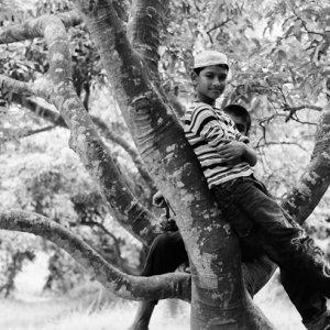 木の上の男の子たち