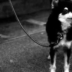 紐に繋がれた犬