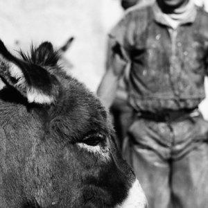 寂しげな瞳の驢馬