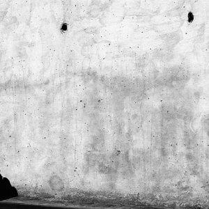 壁の上を動く影