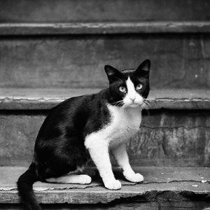 Cat sitting on stairway