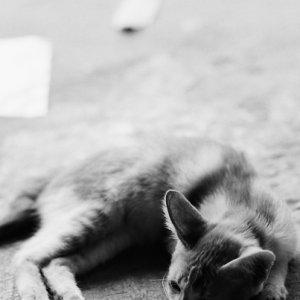 Limp cat