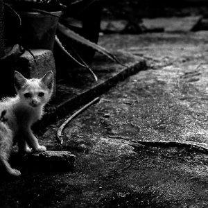 振り返る子猫