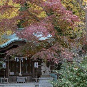 文京区関口の正八幡神社