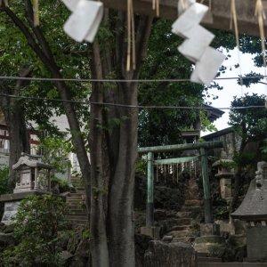 Torii in Tabata Hachiman Jinja