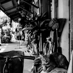Cat relaxing on motorbike