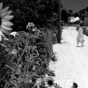 道端の向日葵