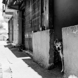 物陰から様子を窺う犬