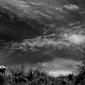 Goat and sky