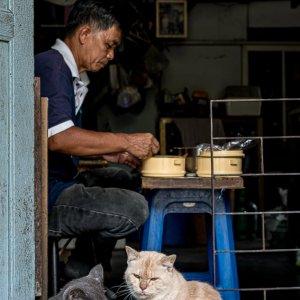 Cats watching man having lunch