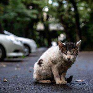 Cat casting sharp glance