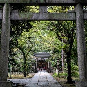参道の向こうに見える赤坂氷川神社