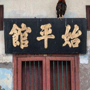 漢字で書かれた扁額の上に止まっていた雌鳥