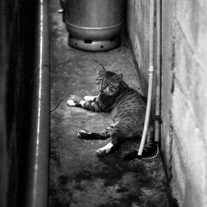 cat lying in narrow lane