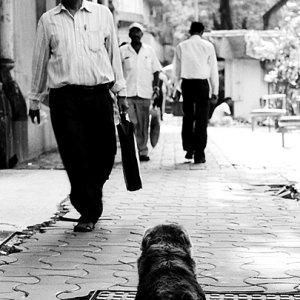 歩道で寝そべる犬