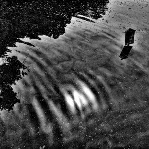 Notice in pond