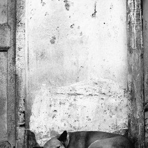 昼寝する犬