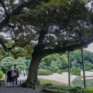 Couple walking between trees in Rikugien garden