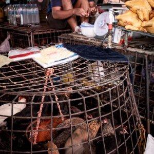 クロントゥーイ市場にあった生きた鶏と鶏の丸焼き