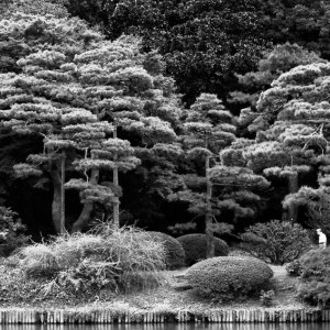 Trees in Rikugien Garden
