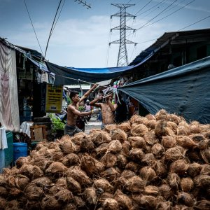 Many coconuts piled up in the middle of the lane