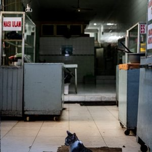 Cats hanging out in the deserted eating place