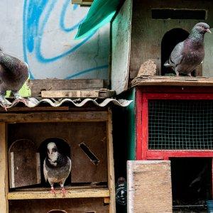 ジャカルタで見かけた鳩小屋