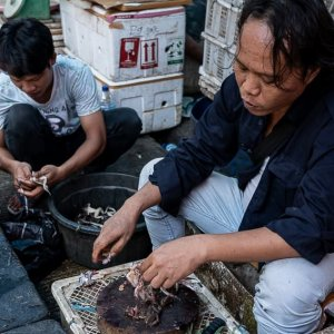Man selling frogs in the market