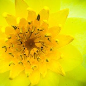 Closeup of yellow flower