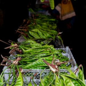 Petai sold in the Kanoman market