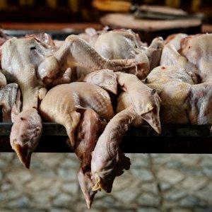 ハエの集っていた鶏肉