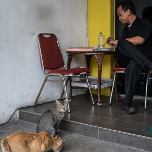 Man eating with two cats