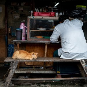 猫と並んで食べる男