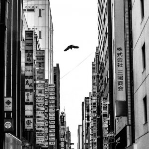 Crow flying over the streets of Ginza