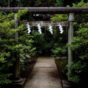 Torii in Hatomori Hachiman Jinja