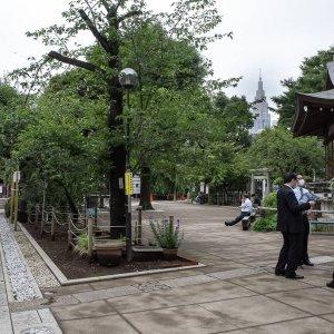 鳩森八幡神社の境内