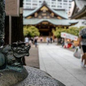 湯島天神・表鳥居の狛犬