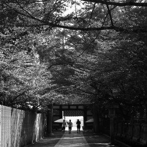 参道に見えた人影