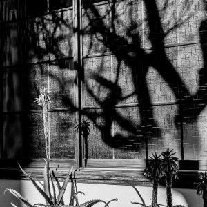 Aloe and shadow in Renjo-in