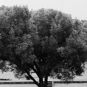 シャニワールワーダの木陰
