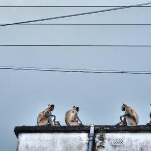 Conference of monkeys