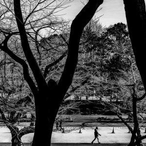 閑散とした上野公園のさくら通り