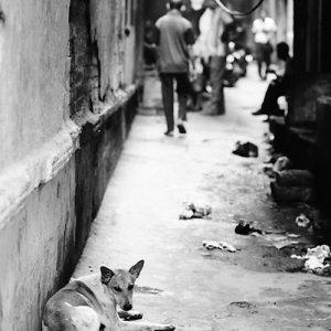 路地で寝そべる犬