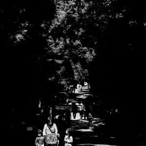 木漏れ日の降り注ぐ明治神宮の参道
