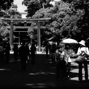 People walking approach way in Meiji Jingu