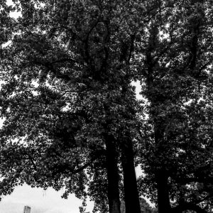 Figure under tall tree