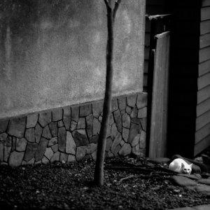 道端で身を潜める白猫